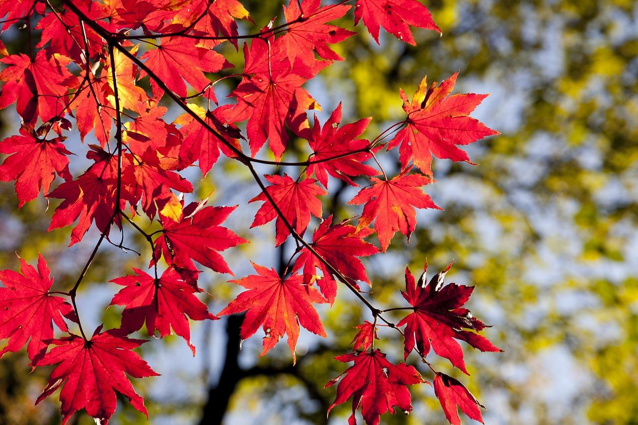 How to Stop Autumn Allergy Symptoms